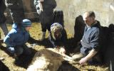 Delivering a lamb on the Lambing course at Kate Humble's Farm Humble by Nature