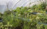 The Aquaponics Solar Greenhouse at Humble by Nature Kate Humble's working farm in Monmouth South Wales