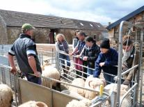 An Introduction to Keeping Sheep course at Kate Humble's Farm Humble By Nature