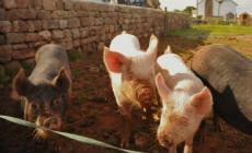 Smallholding for beginners course at Kate Humble's Farm Humble by Nature