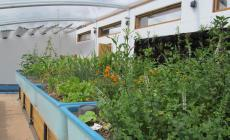 Take a tour of Humble by Nature's Aquaponics Greenhouse and learn about sustainable food production