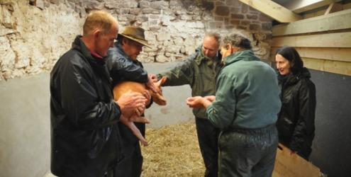 Advanced Pig Keeping course at Kate Humble's Farm Humble by Nature