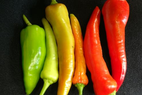 chilli experience day make chilli sauce at Humble by Nature Kate Humble's farm