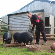 Farmer Tim feeding the pigs