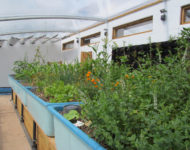 herbs-in-aquaponics