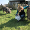 It's time for Kate Humble to put the pigs out