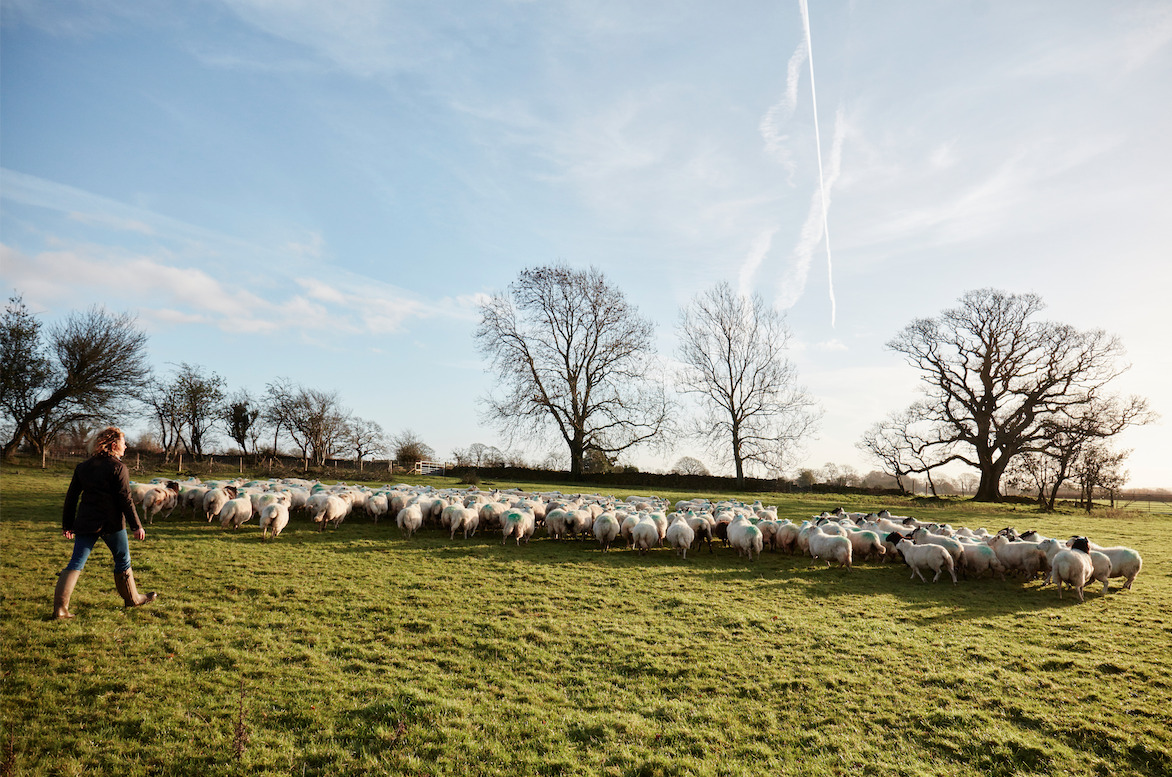 Kate Humble and Teg herding sheep at Humble by Nature